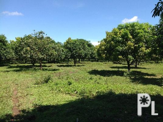 1.9HECTARE CULTIVATED FARMLOT FOR SALE IN MATINA
