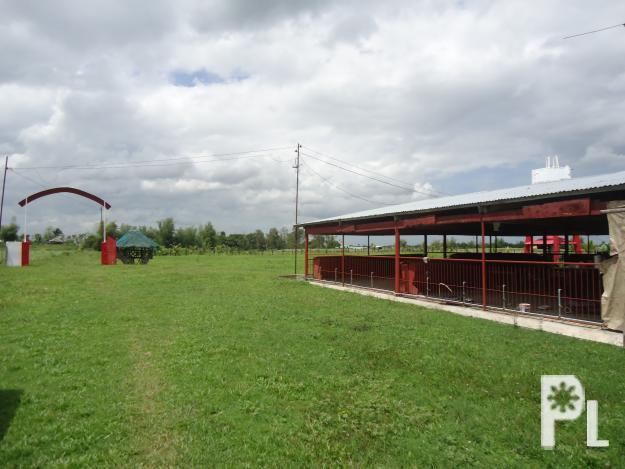 2 Hectare Piggery Fishpond Orchard Ricefield In Murcia For Sale Php 4 5m For Sale In Murcia