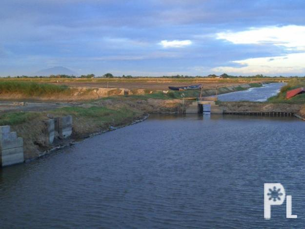89 hectares of fish pond farm in masantol pampanga for Fish farms near me