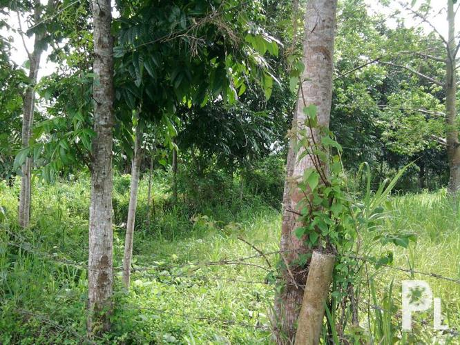 Pasacao Philippines  City pictures : Agricultural land Naga City for Sale in Pasacao, Bicol Region ...