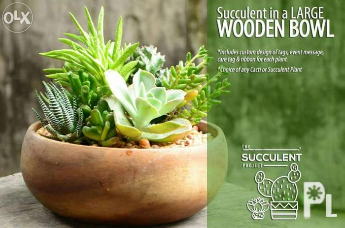 Cactus and succulent arrangements on large wooden bowl for