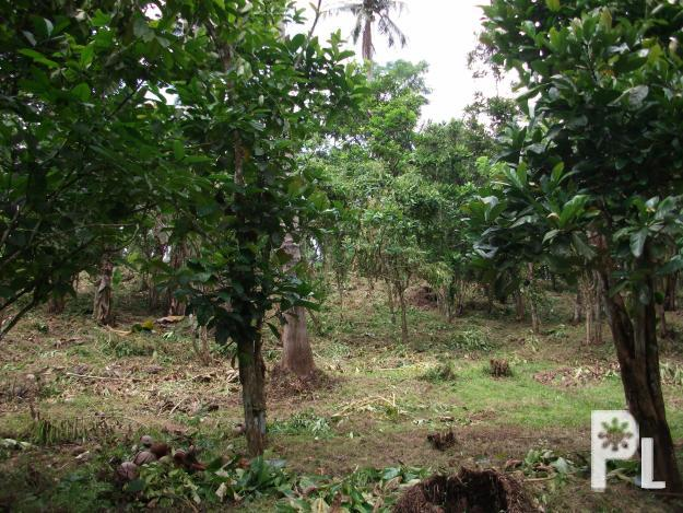 Farm Land with Various Fruit Bearing Trees in Lipa City