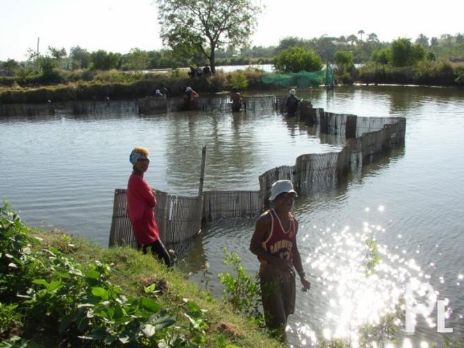 Fish pond for sale binmaley for sale in binmaley ilocos for Large fish ponds for sale