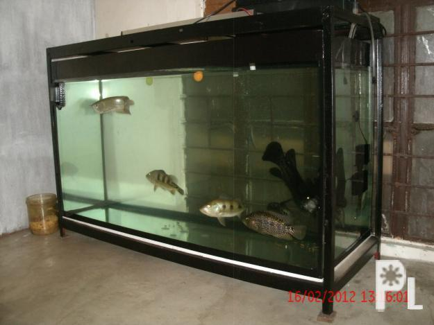 90 gal aquarium for sale aquarium 90 gallon for sale for 90 gallon fish tank stand