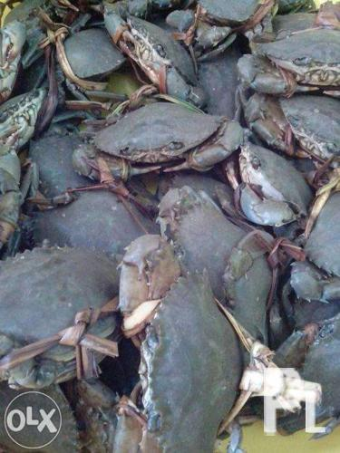 Live Crabs for Sale in Lapu-lapu City (Opon), Central