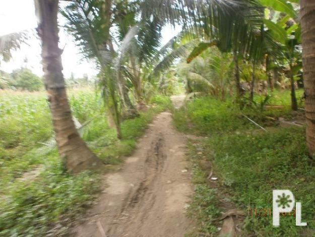 lot for sale in danao City 13,000 sqrmtr 100/sqrmtr ?