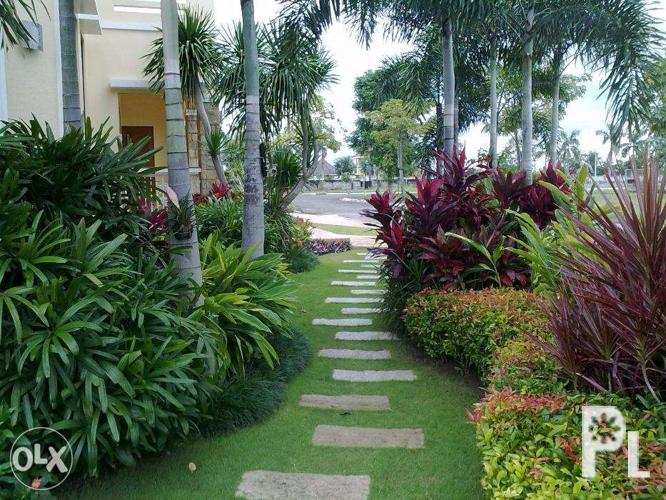 Ornamental Plants And Indoor Plants For Sale In Bulacan