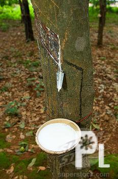 pagadian rubber plantation for sale