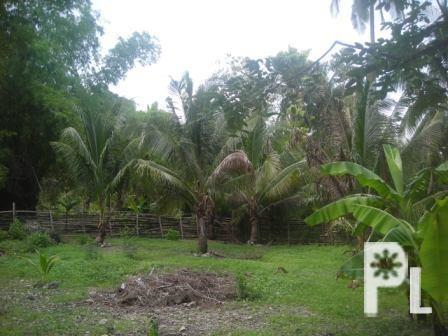 for sale in carceres, oslob, cebu (979sqm) ? Cebu City in Cebu City