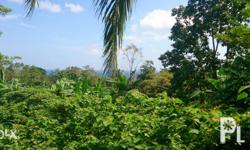 For sale. 3000 square meter lot. Located in Magting, Mambajao, Camiguin Island. Suitable for development. Excellent for vacation rentals, home, or resort. Adjacent to future public swimming pool project. Near school. 600 meters from the coast. Reduced