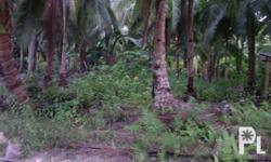 1,437 sqm beach lot located along the tourism road, Mainit, Catangnan, General Luna, Siargao Island. It's a 5-minute Filipino walk away from the beach, 15 minutes walk away from Cloud 9 Surfing Area, and 30 seconds walk to Ocean 101 Beach Resort.