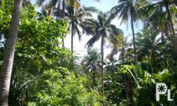 Description this land is close or parallel to the national high-way close to the electric post-very good for poultry,piggery,goat/cows and other animal raising.the coconut and other fruit bearing trees -income generating land like this is a blessing