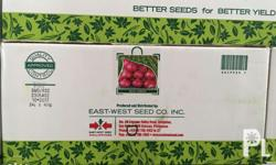 Eastwest Red Pinoy - A red creole variety with excellent bulb quality and storability, with medium sized bulbs (40-50 grams). - Suitable for regular season planting, for direct seeding and transplanting. - Flattened globe in shape and deep red color, high