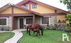 Horses for sale Must pick up in lipa Batangas farm Serious inquiries only