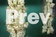 sampaguita leis or flower leis delivery nationwide