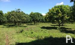 This is for sale 10Hectares Cultivated farmland in