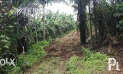 Subdivided FARM LOTS FOR SALE! LOCATION: Brgy. Banay