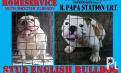 2500 English Bulldog HOMESERVICE with shooter already