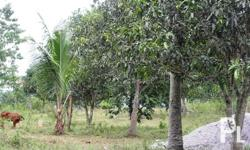selling 3.75 hectares farmlot for sale! area is