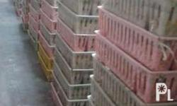 Selling 45 day old chicks (DOC) Standard = 32php every
