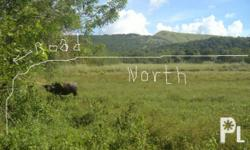 agricultural land for sale at P70/ square meter with