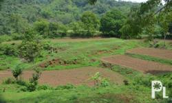 Titled Pasture land , 7340 sq mtrs along Provincial