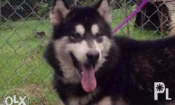 Mother Farm Kennel Offers URGENT ! Quality young adult