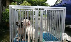 2 American Bully Pups still up for grabs ABKC LT