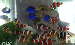 Aquarium fishes for sale subject to availability, very