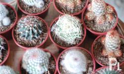 Assorted cacti are available as a unique favor for your