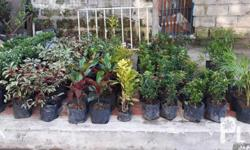 Ornamental plants for landscapping Beautification