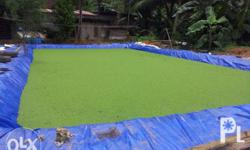 Azolla as organic feeds for chicken, pig, goats, cow,