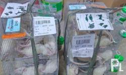 Sprague Dawley rats Wistar rats For sale We offer