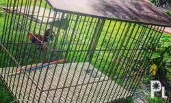 FOR SALE VERY BIG AND SPACIOUS DOG CAGE (for huskies,