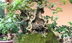 What: All bonsai to go. Why: Why not? RFS: Migrating