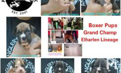 Boxer puppy for Sale in Quezon City, National Capital Region