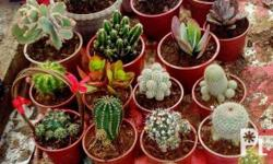 We sell various kinds of cacti and succulents. Price: