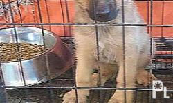 Cage for small breed dog or puppy for sale