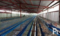 Galvanized Iron Coated Battery Cages Set includes Water
