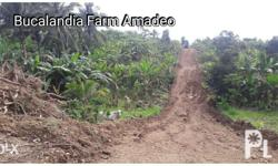 Bucalandia II Amadeo Farm Lot Near Tagaytay 800 meters