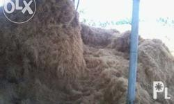 coco fiber for sale, use for upholstery, furniture and