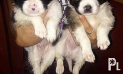 Male and Female Still Available Contact no.