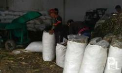 corn silage, nutritious feed for all ruminants, 4/kilo