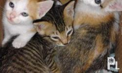 Cut kittens 2-3 months old need good home, ideally