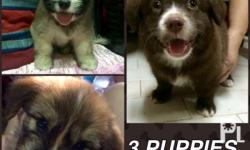 CUTE PUPPIES FOR SALE!!! -still negotiable Breed: