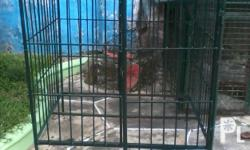 Dog Cage for Large Breeds For sale ? Quezon City