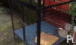 Heavy duty cage Slightly use Negotiable Pick up only Or