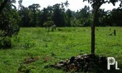Farm Lot in San Vicente, San Pablo Laguna FOR RENT