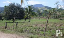 3.9hectares, with mango and coconut trees. Farm land