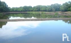 FISH POND FOR SALE Area: 7-Hectares Price: 1.2-Million